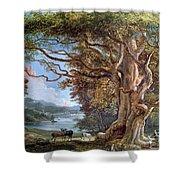 An Ancient Beech Tree Shower Curtain by Paul Sandby