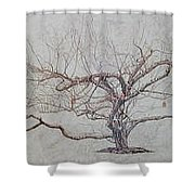Apple Tree In Winter Shower Curtain by Leah  Tomaino