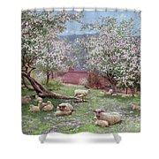 Appleblossom Shower Curtain by William Biscombe Gardner