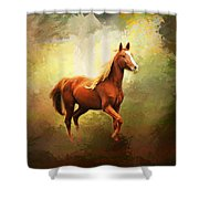 Arabian Horse Shower Curtain by Jai Johnson