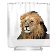 Masai Mara Lion Portrait    Shower Curtain by Aidan Moran