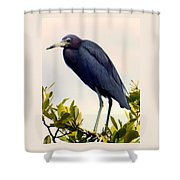 Audubon Blue Shower Curtain by Karen Wiles