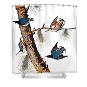 Audubon: Nuthatch Shower Curtain by Granger
