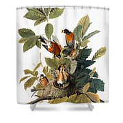 Audubon: Robin Shower Curtain by Granger