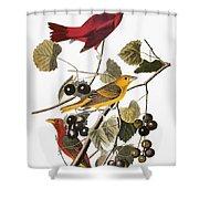 Audubon: Tanager Shower Curtain by Granger