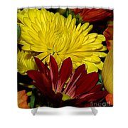 Autumn Colors Shower Curtain by Patricia Griffin Brett