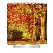 Autumn Colors Shower Curtain by Wim Lanclus