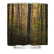 Autumn In The Woods Shower Curtain by Andrew Soundarajan
