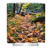 Autumn Path Shower Curtain by Mike  Dawson