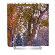 Autumn Snow Park Bench   Shower Curtain by James BO  Insogna