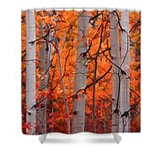 Autumn Splendor Shower Curtain by Don Schwartz