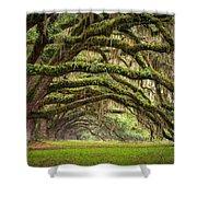 Avenue Of Oaks - Charleston Sc Plantation Live Oak Trees Forest Landscape Shower Curtain by Dave Allen