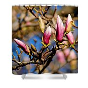 Awaking From Hibernation Shower Curtain by Frozen in Time Fine Art Photography