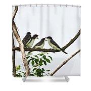 Baby Birds - Eastern Kingbird Family Shower Curtain by Christina Rollo