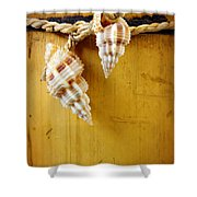 Bamboo And Conches Shower Curtain by Carlos Caetano