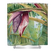 Banana Flower Shower Curtain by AnnaJo Vahle
