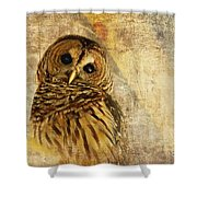 Barred Owl Shower Curtain by Lois Bryan