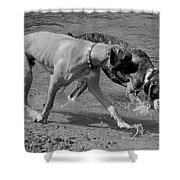 Beach Buddies Shower Curtain by DigiArt Diaries by Vicky B Fuller