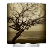 Beach Tree Shower Curtain by Perry Webster