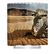 Beach Zebra Shower Curtain by Carlos Caetano