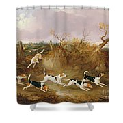 Beagles In Full Cry Shower Curtain by John Dalby