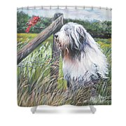 Bearded Collie With Cardinal Shower Curtain by Lee Ann Shepard