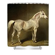 Beatrice Shower Curtain by Carl Constantin Steffeck