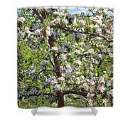 Beautiful Blossoms - Digital Art Shower Curtain by Carol Groenen