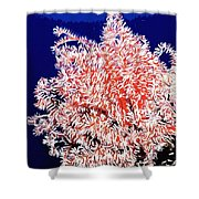 Beautiful Fan Coral Shower Curtain by Lanjee Chee