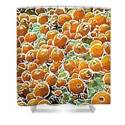 Beautiful Marine Plants 3 Shower Curtain by Lanjee Chee