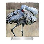 Beautiful Preening Sandhill Crane Shower Curtain by Carol Groenen