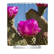 Beavertail Cactus Blossom 2 Shower Curtain by Kelley King