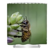 Busy Bee Shower Curtain by Andrea Silies