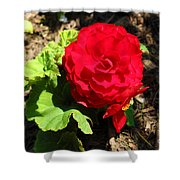 Begonia Flower - Red Shower Curtain by Corey Ford