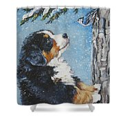 bernese Mountain Dog puppy and nuthatch Shower Curtain by Lee Ann Shepard