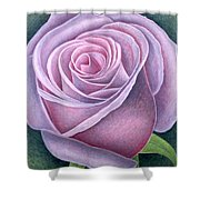 Big Rose Shower Curtain by Ruth Addinall