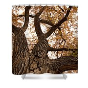 Big Tree Shower Curtain by James BO  Insogna