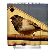 Bird House . 40D11078 Shower Curtain by Wingsdomain Art and Photography