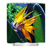 Bird Of Paradise Shower Curtain by Susanne Van Hulst