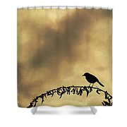 Bird On Branch Montage Shower Curtain by Dave Gordon