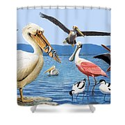 Birds with strange beaks Shower Curtain by R B Davis