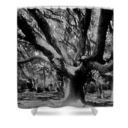 Black Forest Shower Curtain by David Lee Thompson