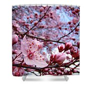 Blossoms Art Blue Sky Spring Tree Blossoms Pink Giclee Baslee Troutman Shower Curtain by Baslee Troutman