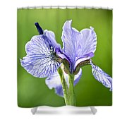 Blue Iris Germanica Shower Curtain by Frank Tschakert