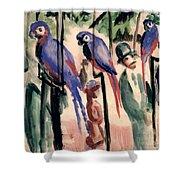 Blue Parrots Shower Curtain by August Macke