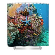 Blue Starfish On Coral Reef, Raja Shower Curtain by Beverly Factor