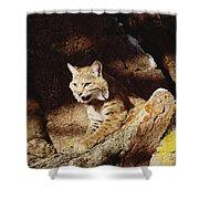 Bobcat Lynx Rufus Portrait On Rock Shower Curtain by Gerry Ellis