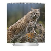 Bobcat Mother And Kittens North America Shower Curtain by Tim Fitzharris
