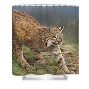 Bobcat Stalking North America Shower Curtain by Tim Fitzharris