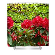 Botanical Garden Art Prints Red Rhodies Trees Baslee Troutman Shower Curtain by Baslee Troutman
